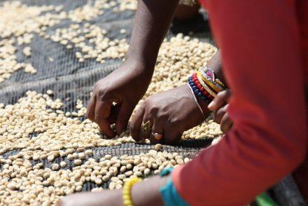 Ethiopia Limu Coffee