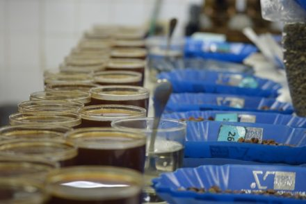 Broadsheet Goes to Honduras: Cupping in Santa Rosa, Honduras