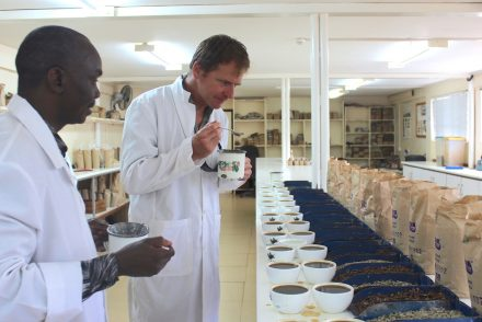 Dirck SIckmuller, cupping coffe in Kaimbu County, Kenya.