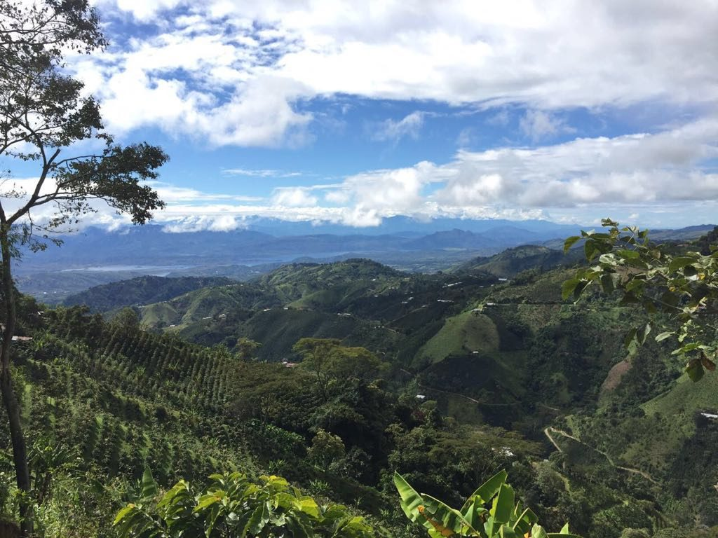 A coffee farm in Garzon, Colombia.
