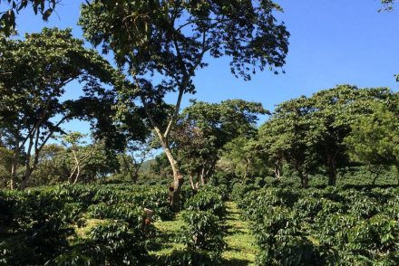 A coffee farm in Huila, Garzon, Colombia