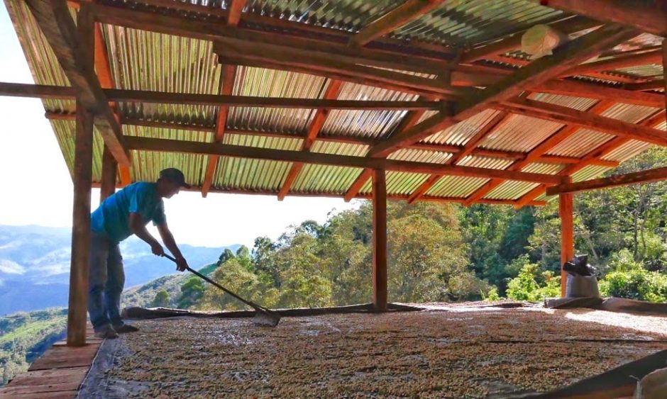 Drying coffee in Peru.