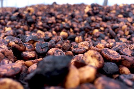 Black Honey Process Coffee