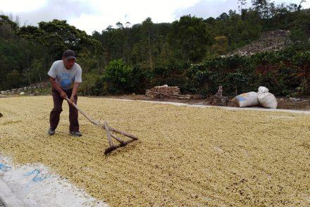 Fausto Martínez Fúnez - Honduras Comayagua Coffee Producer