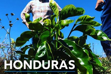 Honduras specialty coffee report