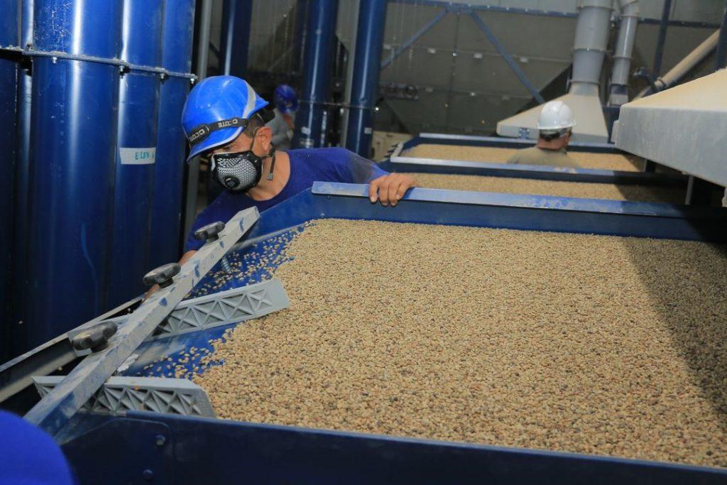 Jaen Peru green coffee sorting